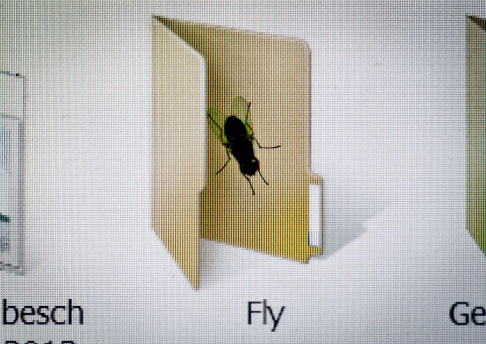 A Fly's own Folder