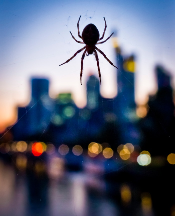 Spider over the City