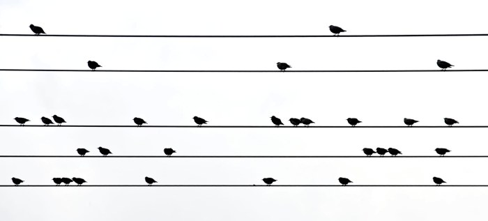 Birdsong on Staves