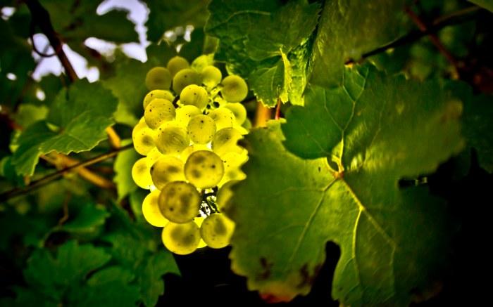Frankfurt Wine