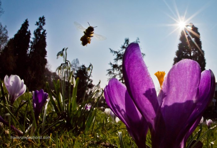 A Bee's Dream
