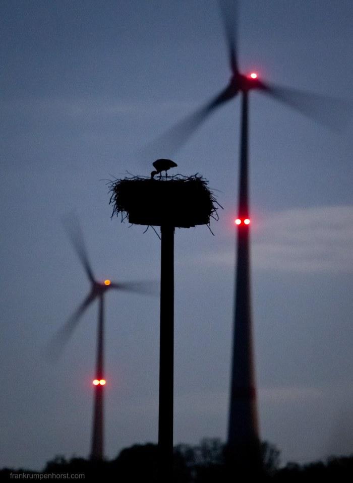 Moonlit Stork