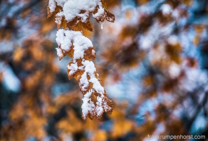autumnsnow