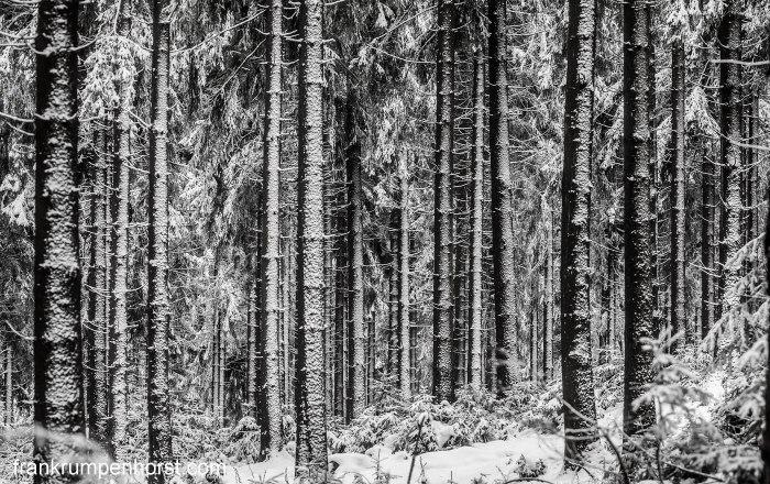 treesandsnow