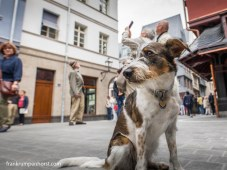 dogs_04