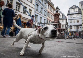 dogs_08