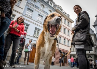 dogs_09