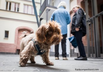 dogs_10